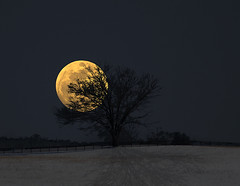 When My Blue Moon Turns Gold Again (reprise) (David D. Green) Tags: composite snowcovered sky snow moon easttennessee nightphoto