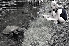 Turtle comes to shore (thomasgorman1) Tags: woman photographer turtle seaturtle pond beach hilo carlsmith lagoon cove nature outdoors bw monochrome shore island hawaii candid streetshots streetphotos nikon