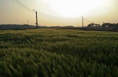 evening walk (bart_azare) Tags: beersel evening walk eveningwalk hometown sunset landscape