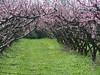 SAM_3085 (Adriano Clari) Tags: fiumicello fiori natura bicicletta adriano clari erba albero parco cielo paesaggio fioritura fiore