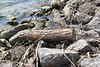 Rutland_015 (Adam.Eales91) Tags: rutland rutlandwater hambleton spring egleton