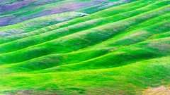 Rolling countryside (SLpixeLS) Tags: italy italie tuscany toscane toscana landscape paysage soil agriculture design texture ondulation undulation wave vagues art minimal minimalism green vert