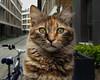 Cat portrait (Vyc_Majoris) Tags: cat portrait kedi portre xiaomi a1 animal pet close closeup cute piscine
