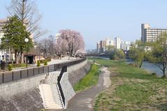 View in Morioka(盛岡の景色) (daigo harada(原田 大吾)) Tags: morioka view landscape sakura tree river
