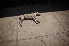 GUANABO: LE REPOS DES CHIENS (pierre.arnoldi) Tags: cuba guanabo chiens repos photoderue photooriginale photocouleur photodevoyage photographequébécois pierrearnoldi canon6d animaux objectiftamron