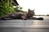 猫 (fumi*23) Tags: ilce7rm3 sonnartfe35mmf28za sony gato katze neko cat 35mm sel35f28z sakurajima kagoshima a7r3 bokeh ねこ 猫 鹿児島 桜島