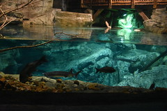 Fresh Water Aquarium (Adventurer Dustin Holmes) Tags: 2018 wondersofwildlife fish aquarium freshwateraquarium