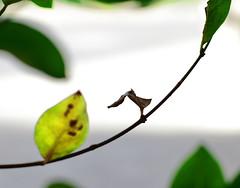 Hojas de otoño, Santiago de Chile (Mario Rivera Cayupi) Tags: bokeh hoja rama color naturaleza sheet branch nature santiago chile planart1450 canon lente14 canon80d carlzeisslens