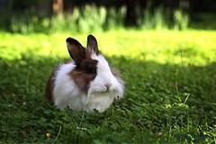 Eye of the rabbit... :-) (Mario Pellerito) Tags: canon eos 60d 50mm 14 italia italie italy mario mariopellerito pellerito pov sicilia sicilie sicily sizilien coniglio rabbit jessica natura nature