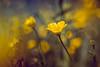 Helios 44-2 (woo_73) Tags: helios44258mmf20 58mm helios 442 natur nature flower blume wiese meadow