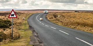 Attention, Sheeps Crossing!