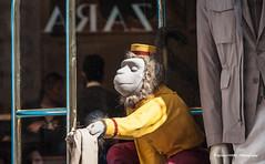ZARA bellmonkey (Ignacio Ferre) Tags: italy italia florencia floréncia firenze fiorence toscana tuscany store tienda escaparate zara monkey mono nikon showcase display bellboy