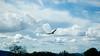 DSC_0046-a10 (stumbleon) Tags: skyscape cloudscape landscape sanandreascalifornia calaverascounty california nikon dslr nikond70s californiastatehighway49 cloud clouds usa
