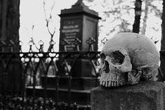 Skull Graveyard (jcubic) Tags: skull bone death dead grave cementary graveyard metal fence stone nikon d610 fx 50mm goth gothic