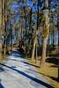 DSC_7043 (andrey.salikov) Tags: 180550mmf3556 jurmala magnifique nikond60 atmosphere atrevida balticlights beautiful buenisima city colour colourfulplaces dreamscene europe fantastic fantasticcolors fantasticplaces foto free goodatmosphere gorgeous harmonyday2018 harmonyvision impressive latvia latvija lettland lettonia light lovely mood moodshot nice niceday niceimage niceplace ottimo peacefulmind photo places relaxart riga scenery sensual sensualstreet spring streetlight stunning superbshots tourism travel trip wonderful юрмала весна отпуск туризм чудесно
