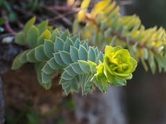 Botanischer Garten der Universität-Wien Botanische Garten Wien (arjuna_zbycho) Tags: botanischergartenwien blume blumen nature makrofoto wiosna frühling spring flower flowers kwiat kwiaty