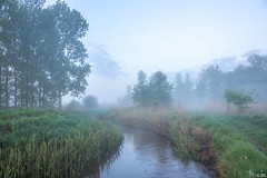 Misty Morning (Martine Lambrechts) Tags: misty morning landscape nature tree waterway