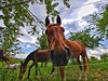 Pferde (Mario Damke) Tags: lg v30 pferde horse