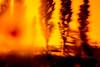 20180429-093 (sulamith.sallmann) Tags: pflanzen analogeffekt analogfilter baum blur botanik bäume effect effects effekt filter folie folientechnik orangegelb pflanze plants tree unscharf sulamithsallmann