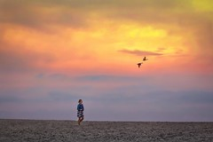 Heading Home (Christina's World Off and On) Tags: landscape seascape beach bird ducks flying birdsflying sand foggy misty mist girl youngwoman youngadult sunset bluehour goldenhour gold walking clouds colorful california sandiego carlsbad artistic digitalart dramatic digitalpainting socalifornia unitedstates portrait