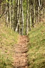 Late Spring (faithroxy) Tags: trees aspenridgetrail sanctuary hike cliffordleenaturesanctuary alberta devon spring green seasons nature canada path