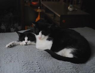 Tuxedo pile up (on Hwy Dog Bed)