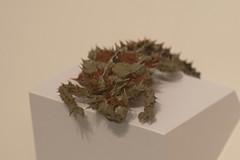Horned lizard (quinet) Tags: 2017 canada ontario rom royalontariomuseum toronto museum musée naturalhistory 124