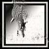 Zebra (pixelarized) Tags: zebra zuidafrika southafrica krugerpark blackwhite zwartwit