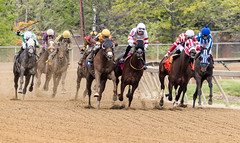 2018 Pimlico Race track (65) (maskirovka77) Tags: pimlico dirt mare race racehorse threeyearold turf yearling