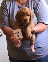 Ella Boy 3 pic 3 4-21