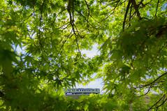 _18A6923.jpg (tenugui) Tags: maple green railway train yamanashi 北杜市 小海線 小淵沢 山梨県 楓 鉄道 鉄道写真 青もみじ railway