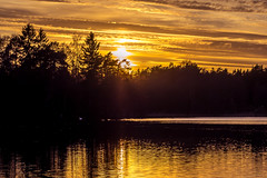 Evening by the Lake (Jens Haggren) Tags: sun sunset evening lake trees silhouettes water reflections light swan scenery nature landscape nacka sweden olympus em1 jenshaggren