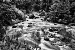 Rapids of the Merced River (Black & White, Yosemite National Park) (thor_mark ) Tags: alongbanksofmercedriver alongelportalrd blackwhite brewerslupine capturenx2edited centralyosemitesierra colorefexpro day7 elportalrd evergreens fieldofwildflowers hillsideoftrees landscape largebouldersinriver lookingne lupinusbreweri mercedcanyon mercedriver mountainvalley mountains mountainsindistance mountainsoffindistance nature nikond800e outside overcast pacificranges project365 rapids river riverbank sierranevada silverefexpro2 trees triptopasoroblesandyosemite waterrapids wildflowers yosemitenationalpark yosemitevalley yosemiterittersierranevada california unitedstates
