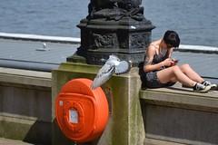 lifebuoy (Breboen) Tags: girl pigeon thames london lazy sunny rest fly animal short legs tattoo orange wings cast spring 女の子 女孩 鸽子 鳩 ロンドン uk
