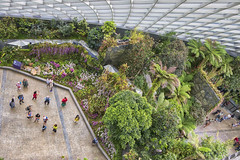 Cloud Forest Dome, Gardens By the Bay, Singapore (Chicago_Tim) Tags: gardens by bay gardensbythebay singapore botanic botanical garden cloudforest cloud forest dome conservatory trees ferns ferntree aerial