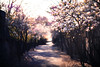 (cara zimmerman) Tags: spring flowers helios whiteriver pathway blur swirl