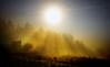 Mencer en Carcacía (Feans) Tags: sony a7r a7rii ii carcacia padron teo lampai galiza galicia sunrise mencer fog neboa mist horreo fe 1635 gm