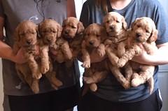 Ginger Girls pic 2 5-12