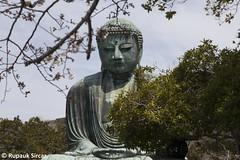 Kamakura Daibutsu (Rupauk) Tags: kotokuin kamakura japan greatbuddha giantbuddha statue bronzestatue