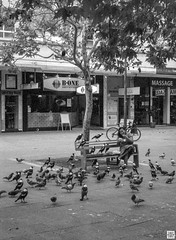 street (Pavel Vrzala) Tags: australia australie canberra 2015 2014 olympus pen ft penft blackandwhite bw 35mm halfframe film act city civic citycentre analog analogue analogphotography filmphotography filmcamera pigeons kodak kodaktmax100 blackwhite blackandwhitephoto