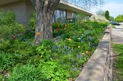 (UWW University Housing) Tags: plants flowers uww uwwhitewater campusbeauty uwwcampus leaves spring 2018 trees