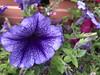 flowers (Hideki Iba) Tags: iphone iphone8 nature japan