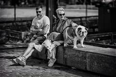 Bulldog (Fouquier ॐ) Tags: bulldog mono urban people bw blackandwhite monochrome antwerp belgium