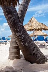 DSCF2509 (Eric.Burniche) Tags: dominican dominicanrepublic caribbean beach palmtree ocean water sand vacation island