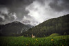 Another Classic (der_peste (on/off)) Tags: chapel church sky clouds moody lawn forest rainy misty foggy mist fog mountains alps dolomites southtyrol südtirol flowers light shadow landscape
