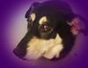 20180410_105117 (annrkiszt) Tags: husky pyper mypetmonster dog
