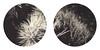 Spirit World Rising 10 (Joann Edmonds) Tags: roidweek polaroidweek instantfilm polaroid sx70 tip impossibleproject bw roundframe blackandwhite monochrome joshuatree nationalpark flora nature upclose blur night dreamworld spiritworld