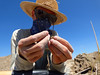 Xmas Valley 5 (Wolfram Burner) Tags: woolly mammoth survey fossils footprint path geology uoregon paleontology blm exploration research behavior