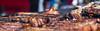 BBQ Pork Belly (paulbidwell) Tags: bbq pork rib grill fire food meat liverpool sefton park festival