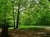 Friedwald Uetze (W@llus2010) Tags: gegenlicht wald grün frühling tz61
